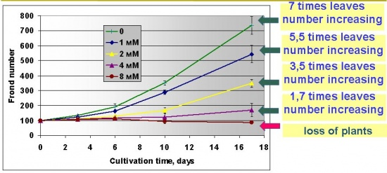 Lemna plants growht under Cr(VI) indused stress.jpg