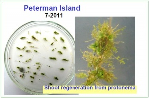 Samples from Peterman Island 2011.jpg