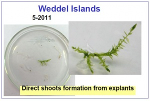 Samples from Weddel Islands 2011.jpg