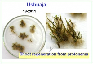 Samples from Ushuaja 2011.jpg