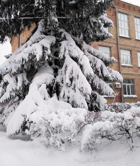 2017 ICBGE Winter by Matvieieva.jpg