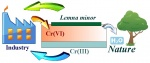 Biotechnology for water purification from Cr(VI) by Lemna minor.jpg
