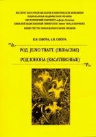 Сикура Сикура Род Юнона Касатиковые Juno Iridaceae.jpg