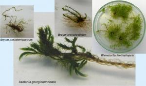 4moses in vitro 2013.jpg