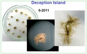 Samples from Deception Island 2011.jpg